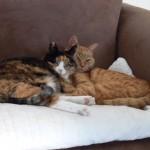 Fotoreportage Op Mix Erf - Erfdieren - Kat Mix en broer