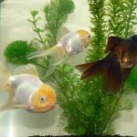 Fotoreportage Op Mix Erf - Erfdieren - Vissen