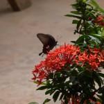 Fotoreportage Op Mix Erf - Wendy's wereld - Vlinder Thailand 2011
