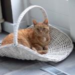 Fotoreportage Op Mix Erf - Erfdieren - kat Juud