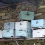 Fotoreportage Op Mix Erf - Wendy's wereld - Evia 2012 bijenkasten