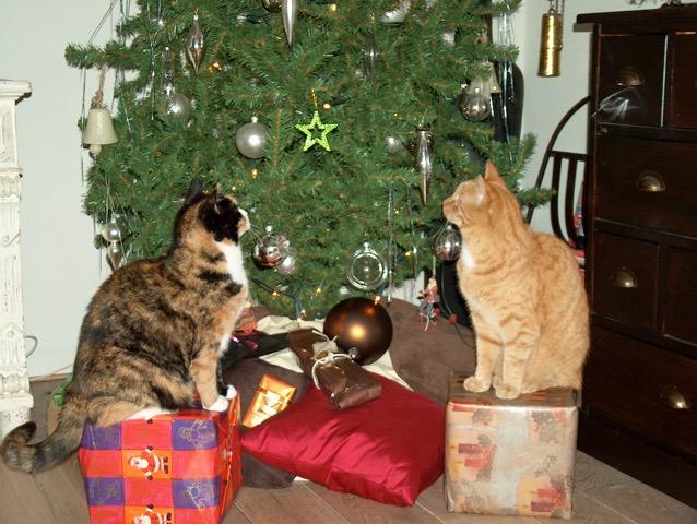 Fotoreportage Op Mix Erf - Erfdieren - katten Mix en Juud kerst 2005