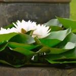 Fotoreportage Op Mix Erf - Bloemen en planten - Waterlelie