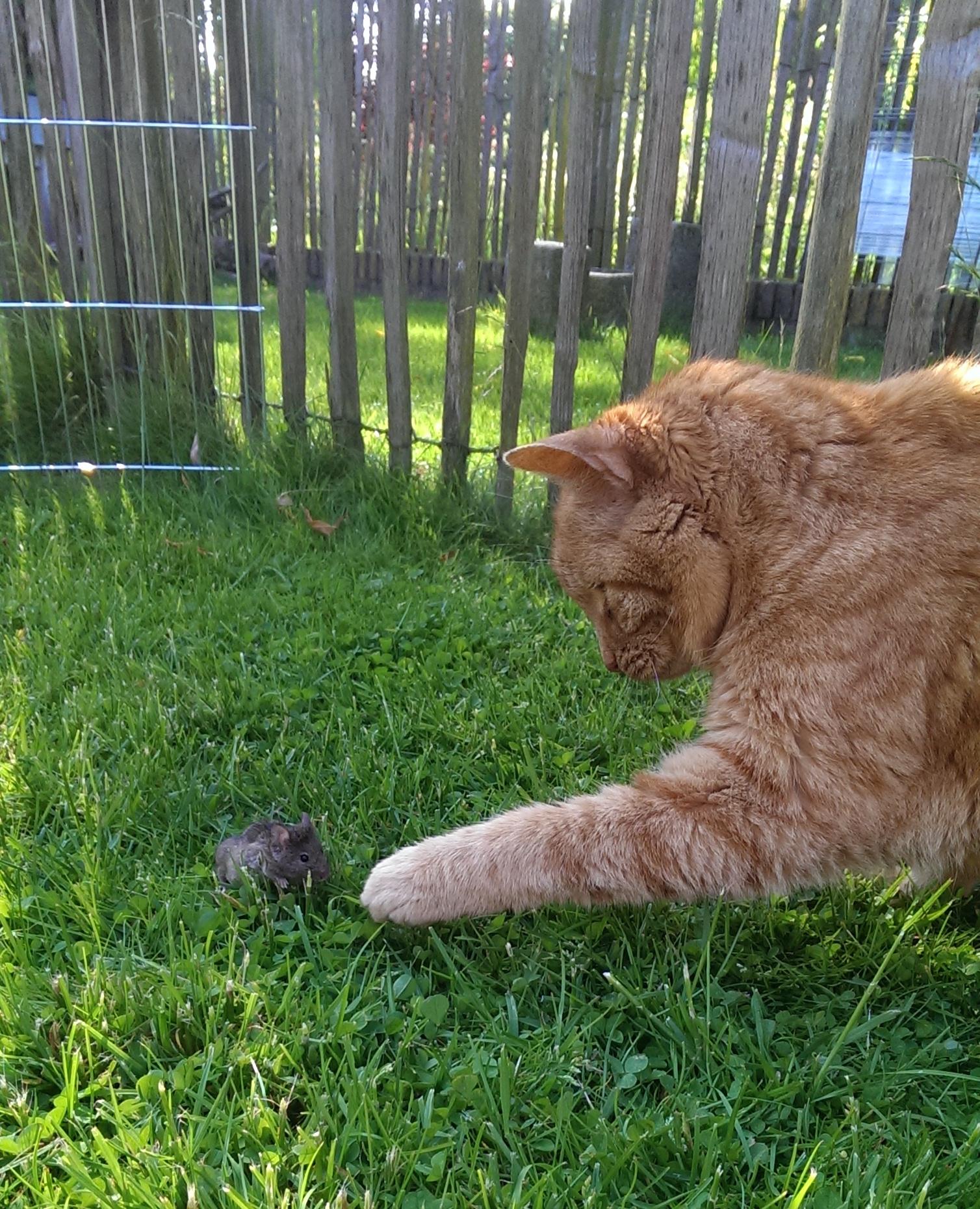 op-mix-erf-erf-dieren-wendy-phaff-juud-en-muis