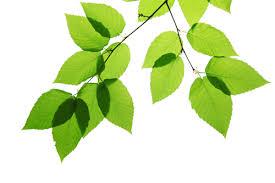 op-mix-erf-blog-spreuken-blaadjes-voor-tuinspreuken