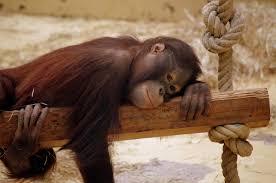 op-mix-erf-blog-spreuken-chimpansee