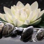 op-mix-erf-blog-spreuken-lotusbloem-wit