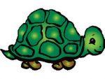 Op Mix Erf - blog - spreuken - schildpad