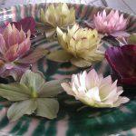 Fotoreportage Op Mix Erf - Bloemen en planten - Wendy Phaff - bloemen van de kerstroos in schaal