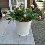Fotoreportage Op Mix Erf - Bloemen en planten - Wendy Phaff - pioenen in emaille emmer