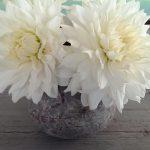op-mix-erf-bloemen-en-planten-wendy-phaff-dahlias