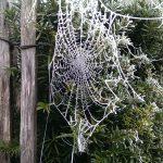 op-mix-erf-blog-teksten-bevroren-spinnenweb