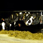 op-mix-erf-wendys-wereld-koeien-treek-op-stal