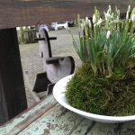 Op Mix Erf - bloemen en planten - Wendy Phaff - sneeuwklokjes