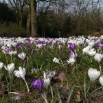Op Mix Erf - Blog - teksten - crocussen