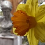 Op Mix Erf - Blog - teksten - lente - narcis