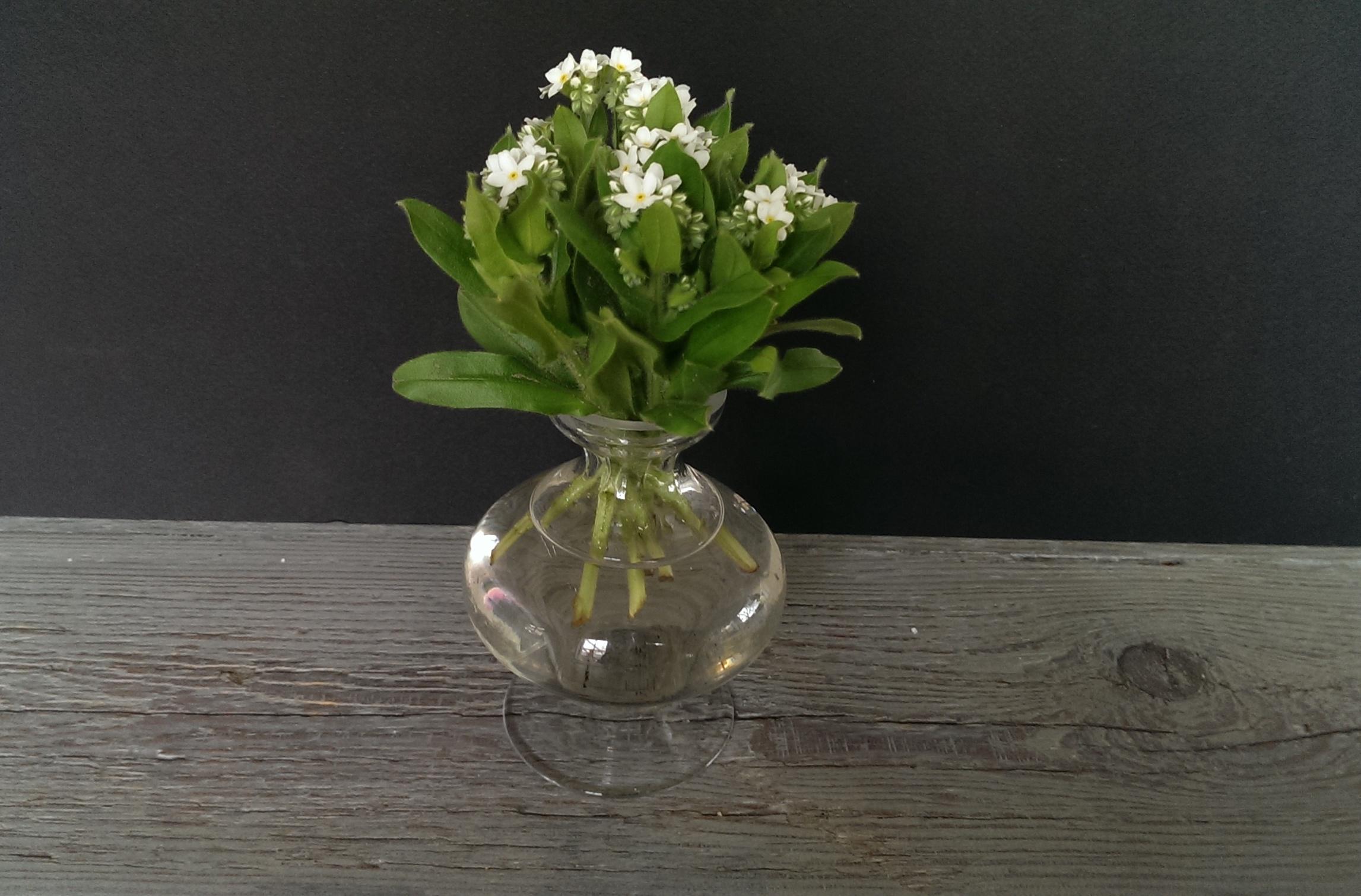 Op Mix Erf - bloemen en planten - Wendy Phaff - Gewoon vlieskelkje - vergeet-mij-nietje-wit