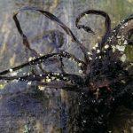 Op Mix Erf - bloemen en planten - Wendy Phaff - Gewoon vlieskelkje - Hymenoscyphus caudatus