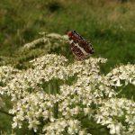 Op Mix Erf - Wendy's Wereld - vlinder landkaartje