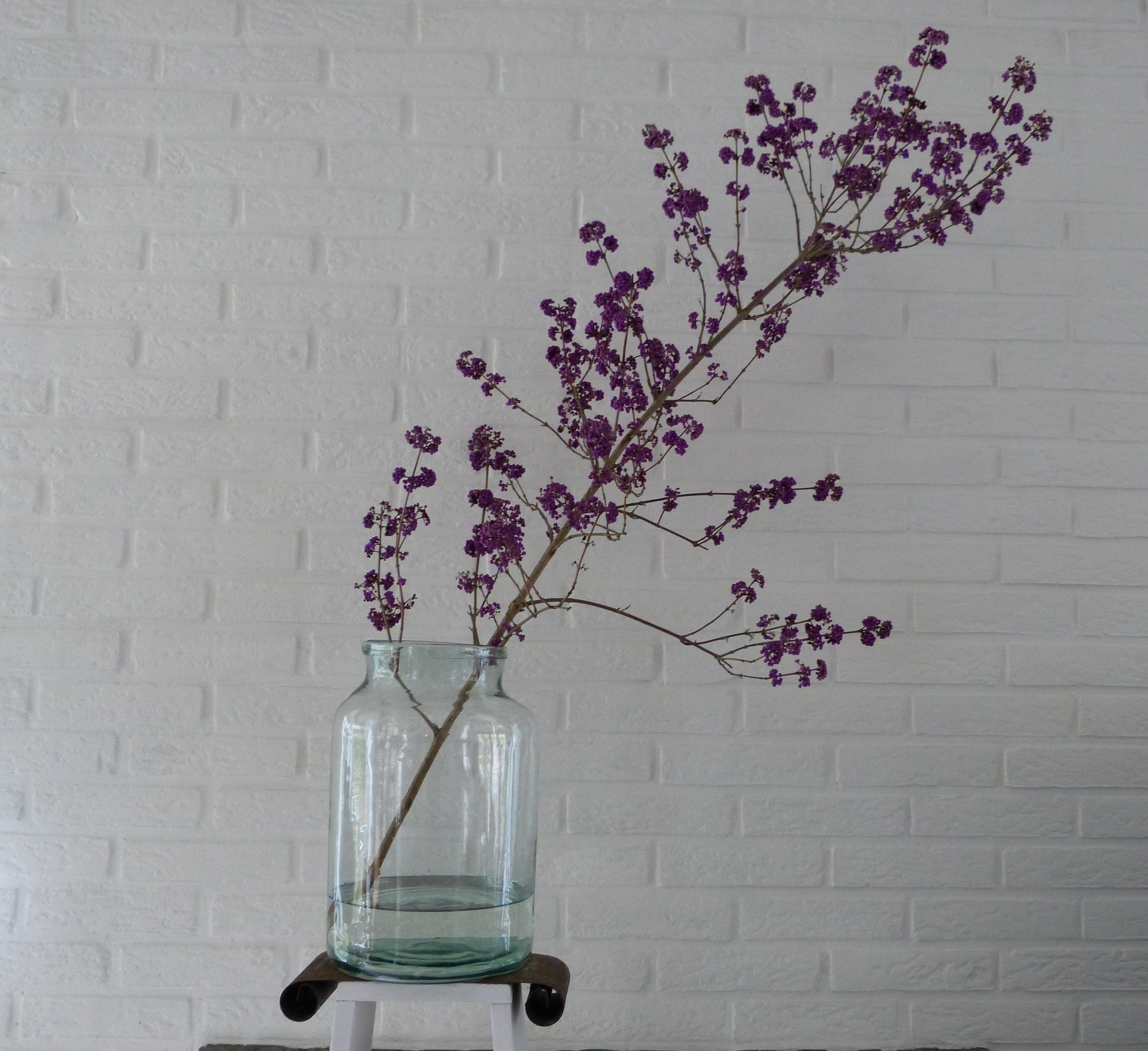 op-mix-erf-bloemen-en-planten-wendy-phaff-callicarpa