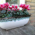 Op Mix Erf - bloemen en planten - Wendy Phaff - cyclamen